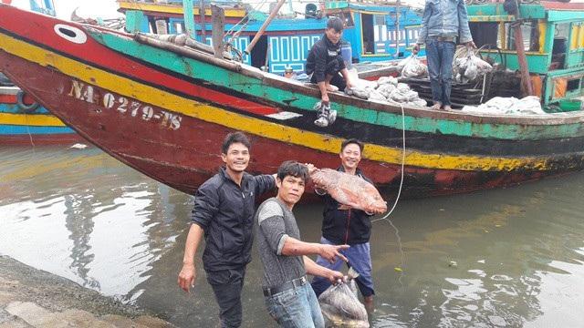 Những chuyến biển cuối năm đầy ắp hải sản mang lại niềm vui cho ngư dân Nghệ An. Ảnh: Lê Tập