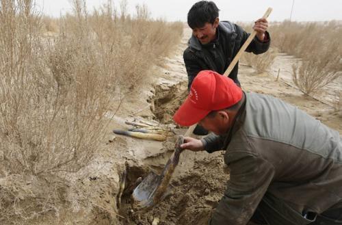 """Thu hàng tỷ đồng mỗi năm nhờ trồng """"nhân sâm của sa mạc"""" - 3"""