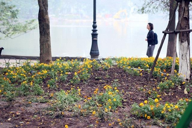 Nhiều vườn hoa bên hồ Gươm tan nát vì bị du khách dẫm đạp trong dịp nghỉ Tết Dương lịch, đặc biệt trong đêm giao thừa đón năm mới 2018 với lượng người tập trung đông kỷ lục. (Ảnh: Xuân Ngọc)