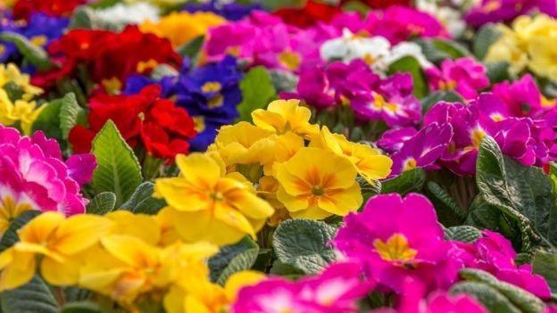 Thực vật hạt kín là loài thực vật đa dạng nhất trên đất liền.