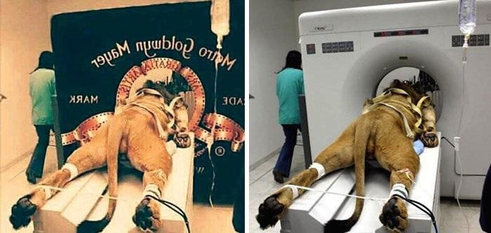Nhìn lại những bức ảnh gây sốt đã đánh lừa cả cộng đồng mạng