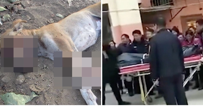 Thảm kịch con trai 13 tuổi giết mẹ vì mẹ giết chó cưng