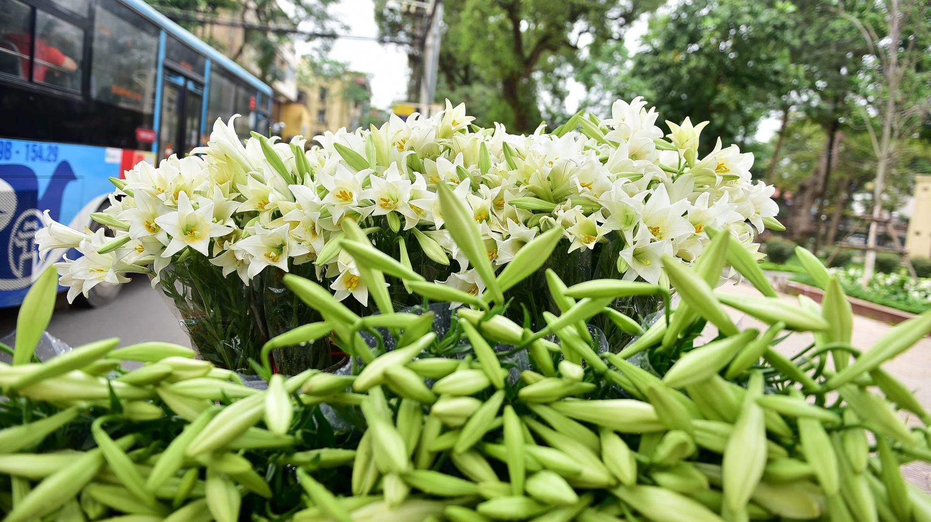 Tháng tư về, hoa loa kèn tinh khôi xuống phố Hà Nội - 2