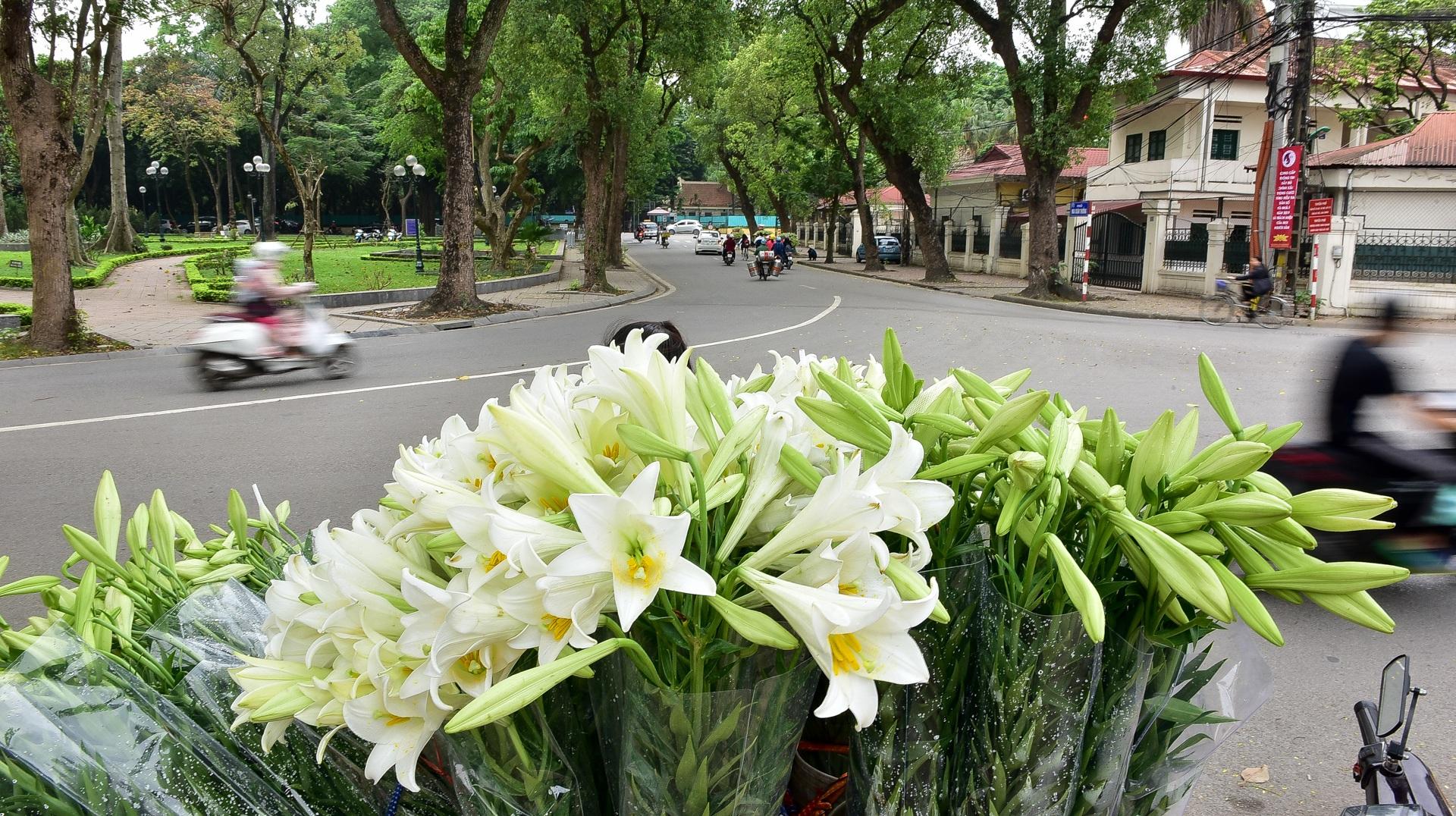 Tháng tư về, hoa loa kèn tinh khôi xuống phố Hà Nội - 1