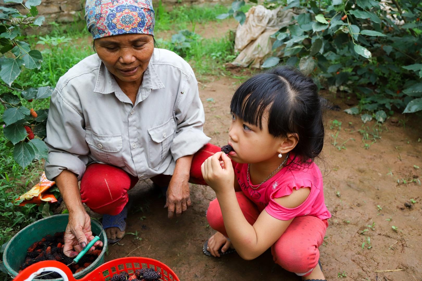 Nông dân ngoại thành Hà Nội mỏi tay thu hoạch dâu chín - 16