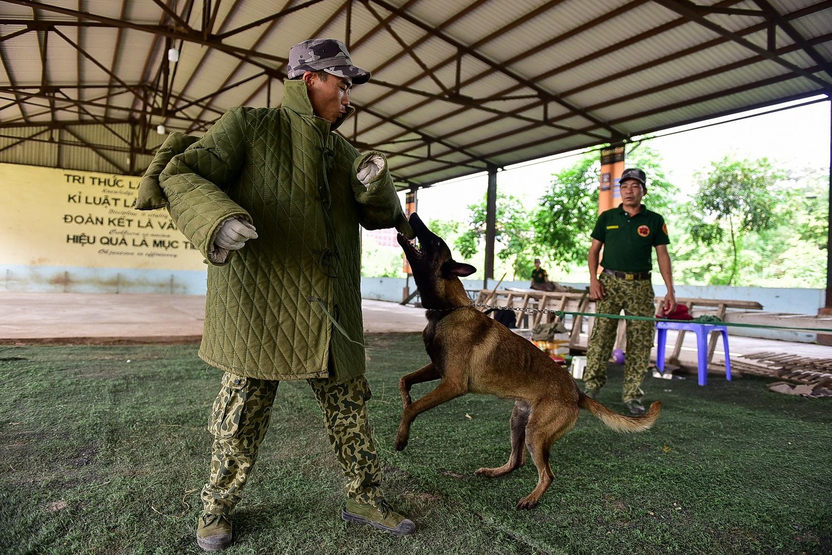 Sau hàng loạt vụ chó tấn công kinh hoàng: Những kinh nghiệm sống còn để thoát hiểm - 1