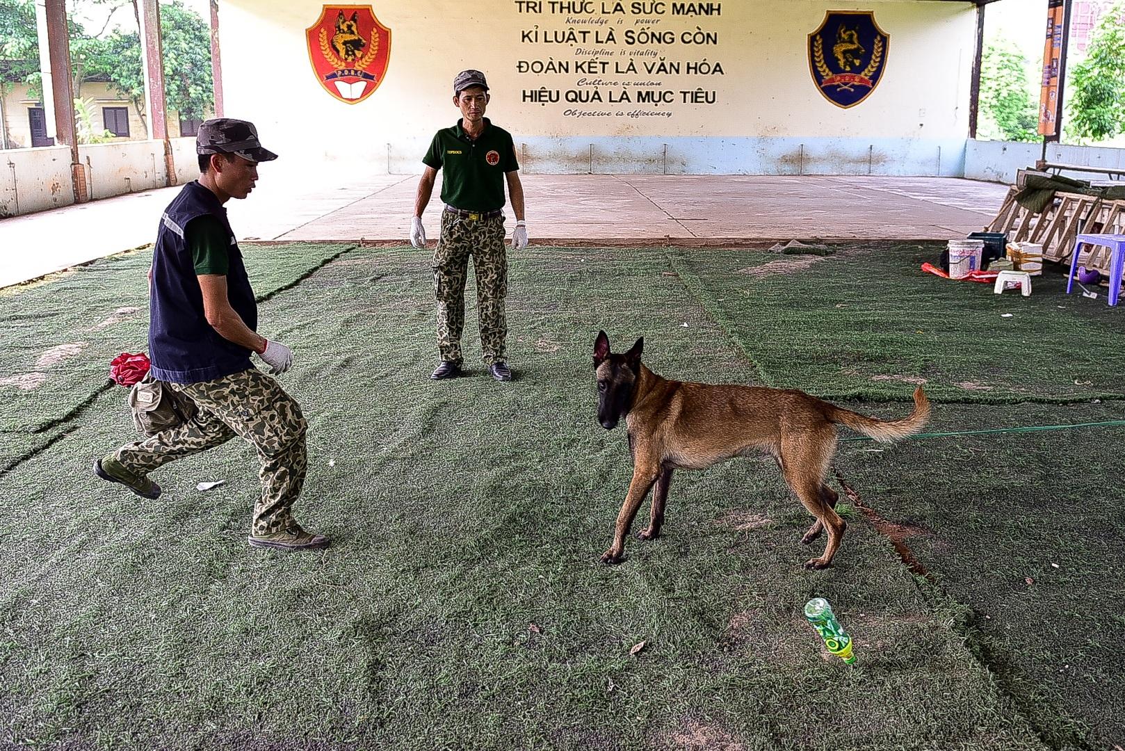 Sau hàng loạt vụ chó tấn công kinh hoàng: Những kinh nghiệm sống còn để thoát hiểm - 2