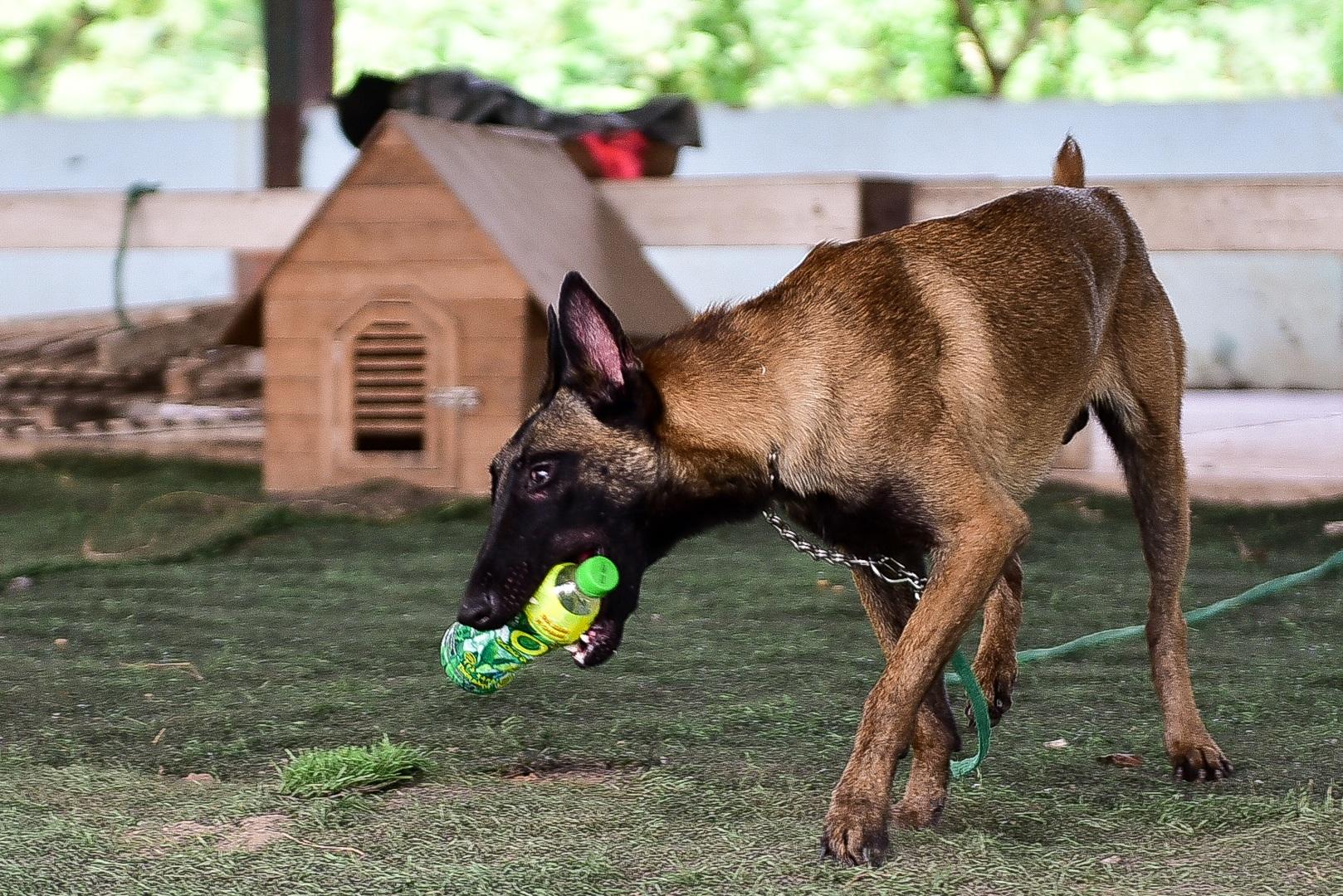 Sau hàng loạt vụ chó tấn công kinh hoàng: Những kinh nghiệm sống còn để thoát hiểm - 3