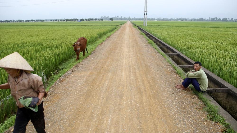 Bức tranh đồng quê xanh ngắt ở ngoại thành Hà Nội - 13