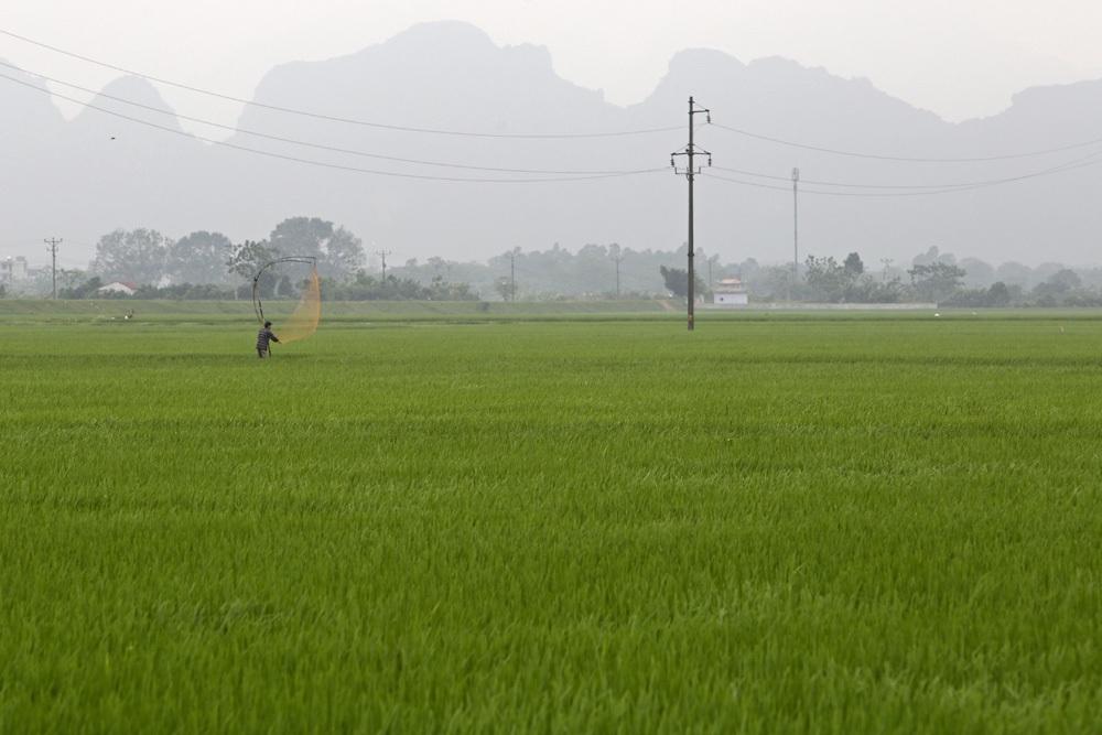 Bức tranh đồng quê xanh ngắt ở ngoại thành Hà Nội - 2