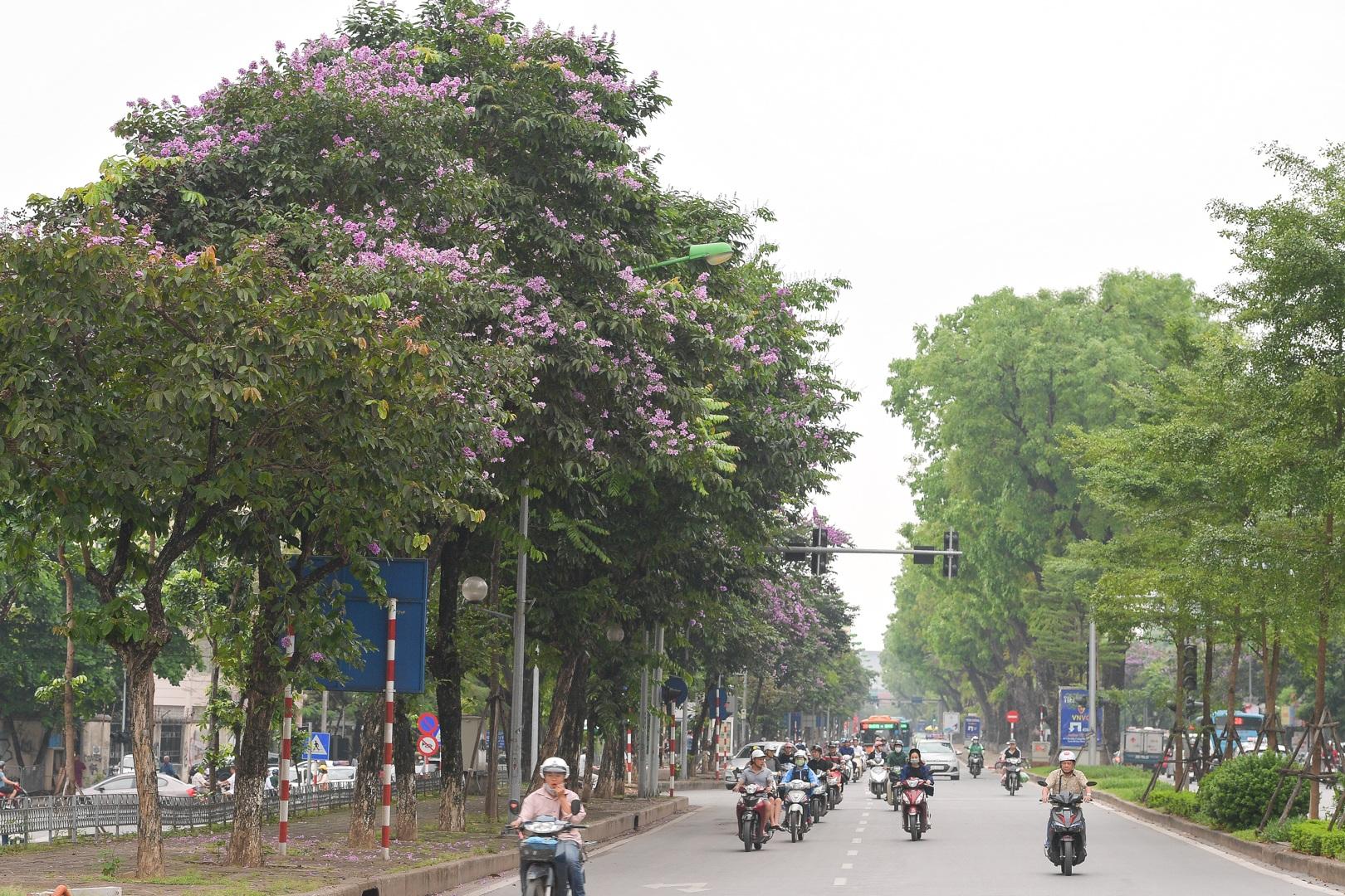 Hoa bằng lăng mộng mơ nhuộm tím đường phố Hà Nội - 1