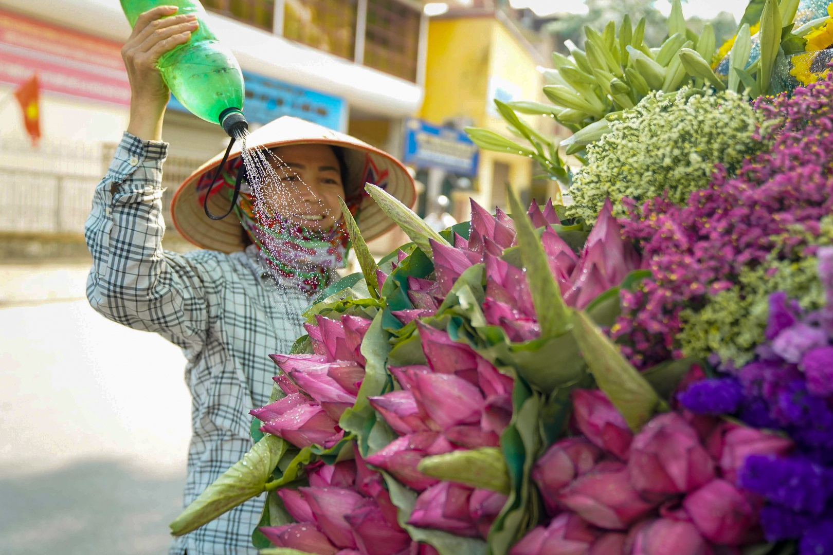 Nhẹ nhàng hương sắc hoa sen đầu mùa - 9