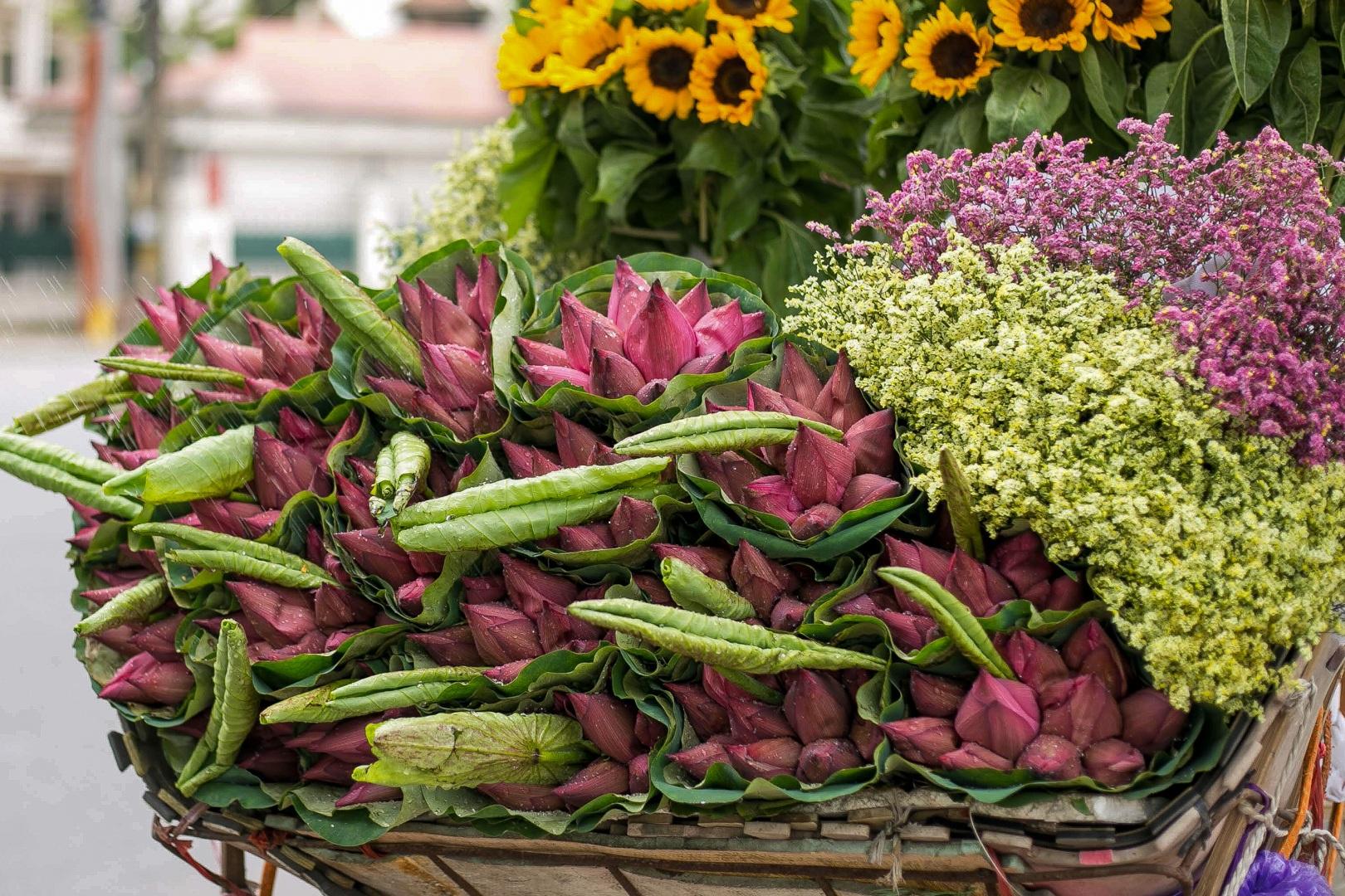 Nhẹ nhàng hương sắc hoa sen đầu mùa - 3