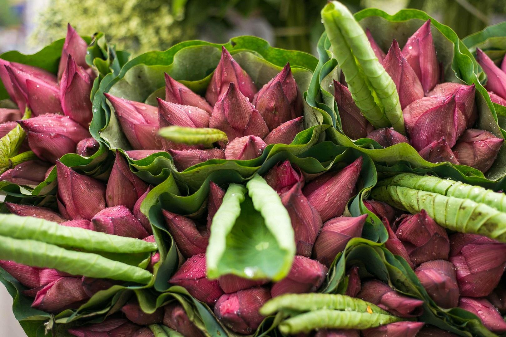 Nhẹ nhàng hương sắc hoa sen đầu mùa - 7