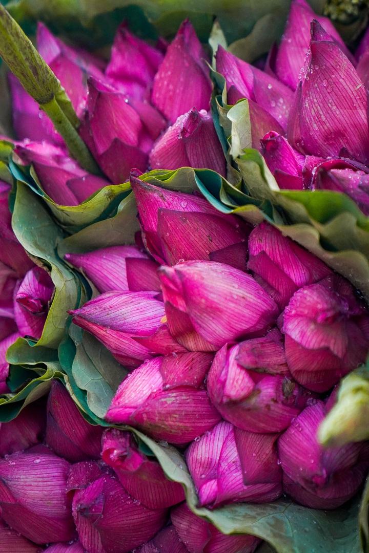 Nhẹ nhàng hương sắc hoa sen đầu mùa - 5