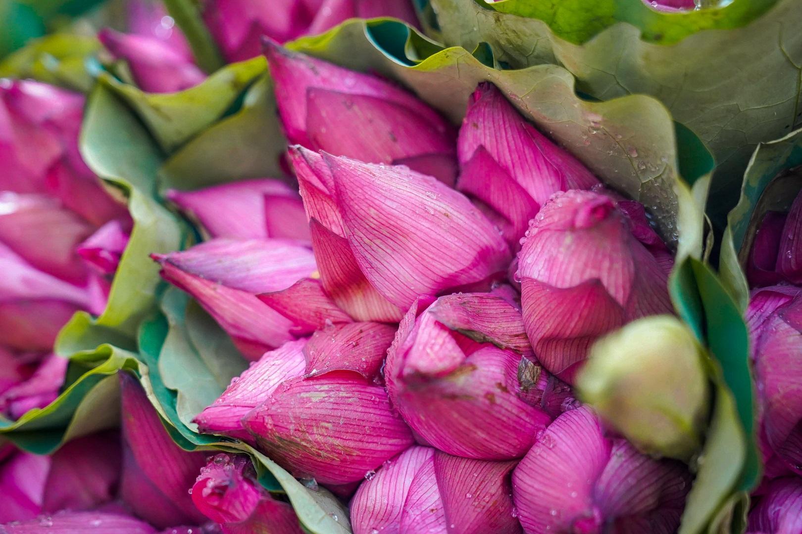 Nhẹ nhàng hương sắc hoa sen đầu mùa - 8