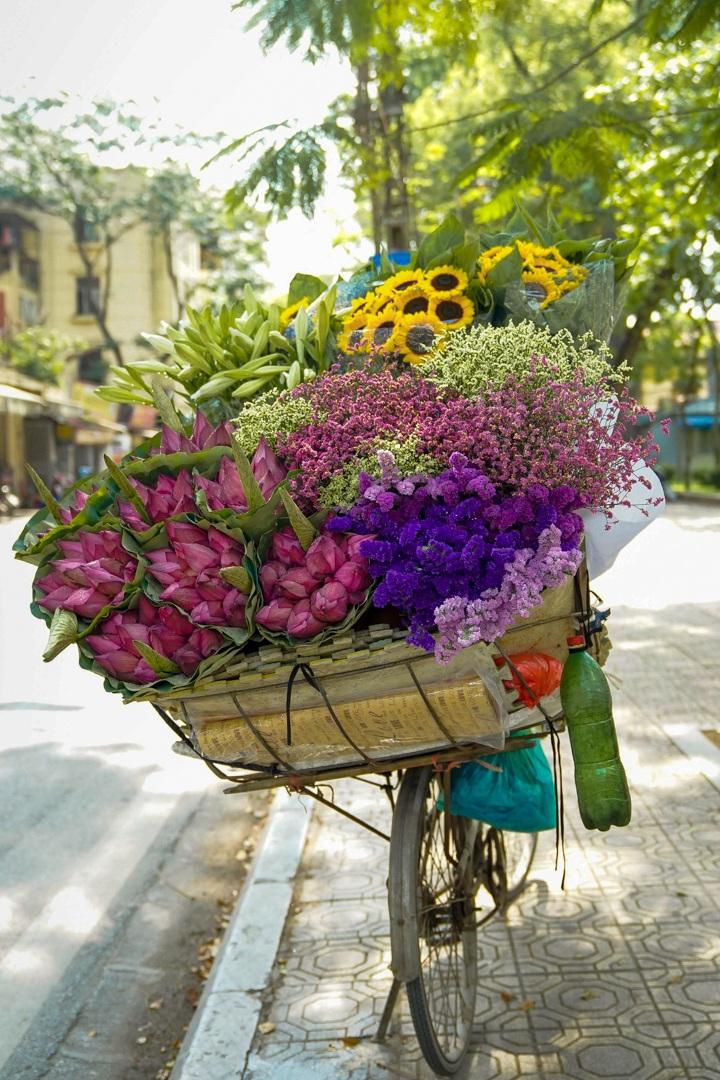 Nhẹ nhàng hương sắc hoa sen đầu mùa - 6