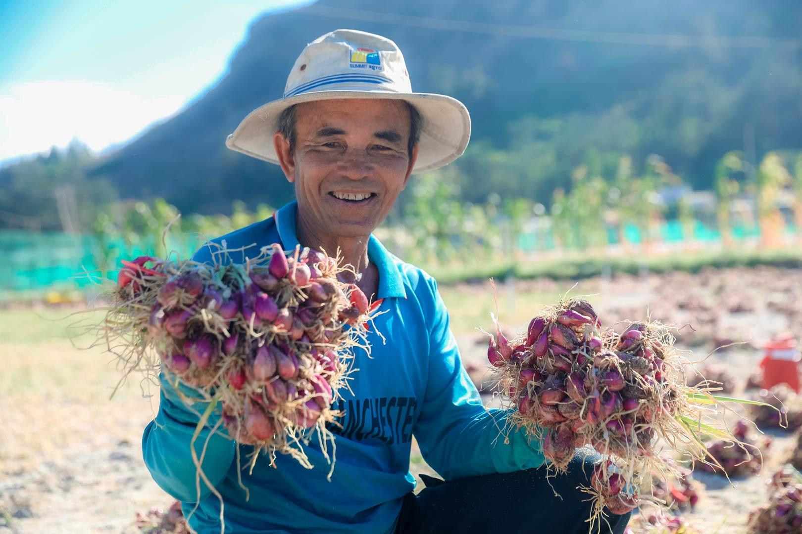Ngọc tím Lý Sơn vào vụ: Giá cao gấp đôi, nông dân khấp khởi vui mừng - 10