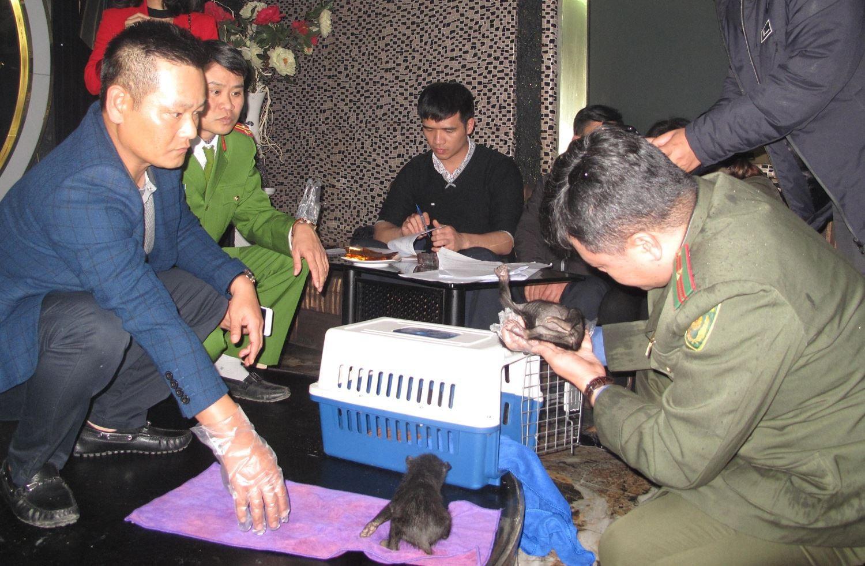 Giải cứu 2 cá thể gấu ngựa đang bị đem bán - Ảnh 1.