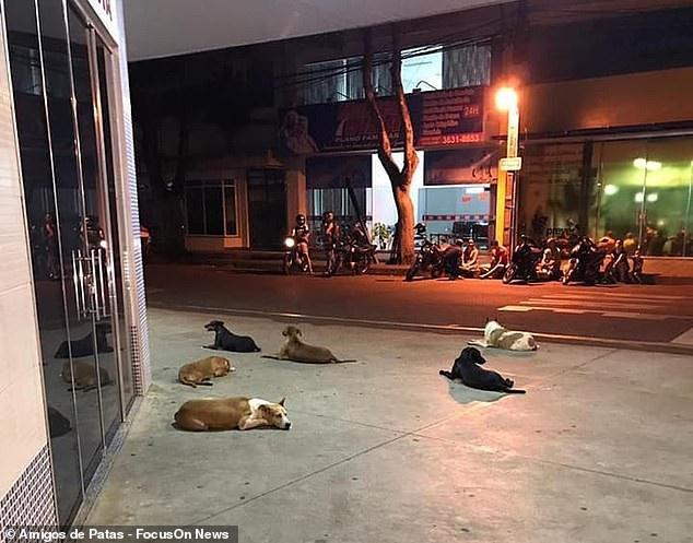 """Clip """"bầy chó đuổi theo xe cứu thương chở ông chủ vô gia cư"""" khiến dân mạng cảm động - Ảnh 1."""