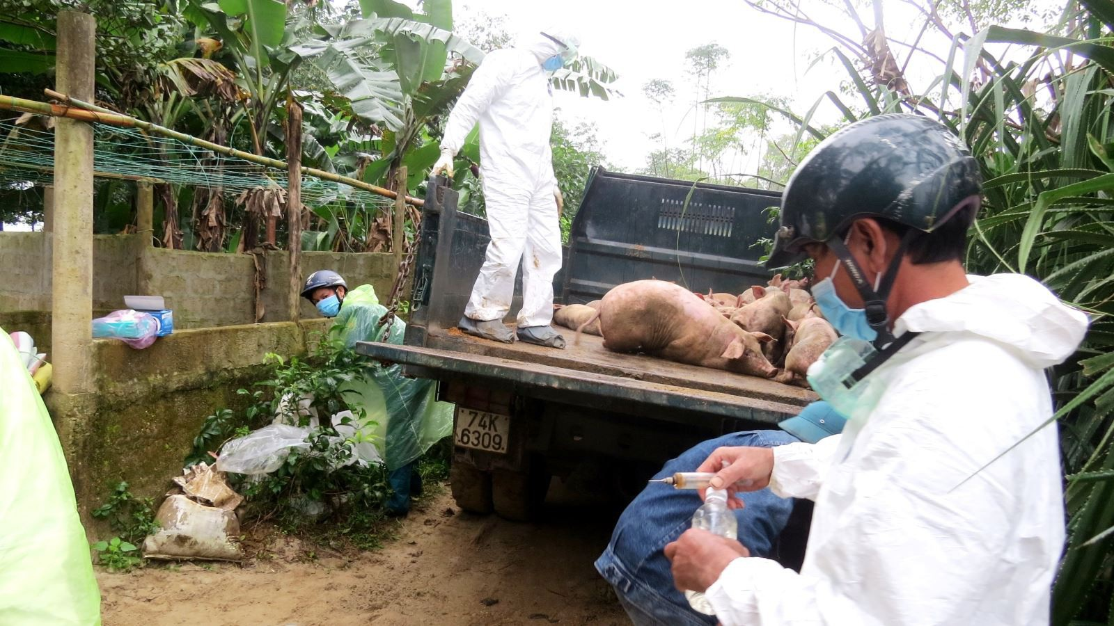 Dịch lở mồm long móng lan rộng, hàng trăm con gia súc bệnh bị tiêu hủy - Ảnh 1.