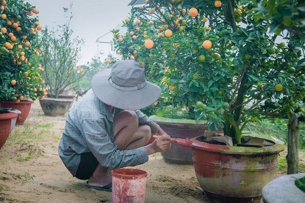 Người trồng quất kiểng Hội An sẵn sàng cho Tết Nguyên đán - Ảnh 8.