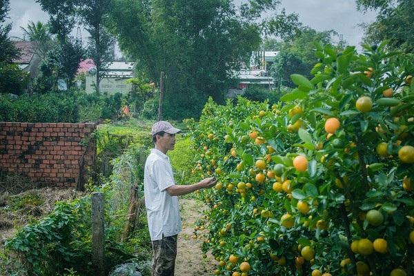 Người trồng quất kiểng Hội An sẵn sàng cho Tết Nguyên đán - Ảnh 9.