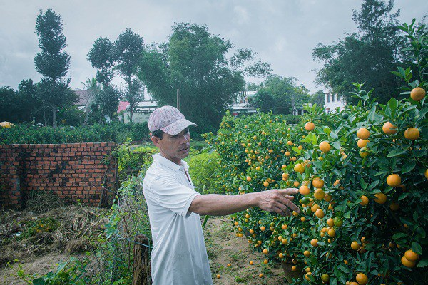 Người trồng quất kiểng Hội An sẵn sàng cho Tết Nguyên đán - Ảnh 10.