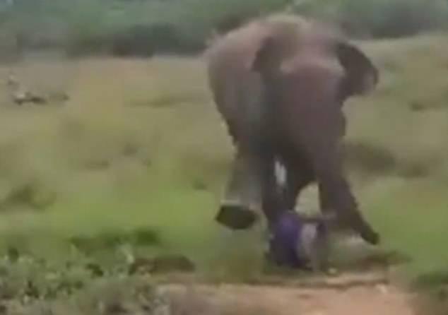 Kinh hãi khoảnh khắc người đàn ông bị voi hoang dã giẫm chết khi tìm cách tiếp cận - Ảnh 1.