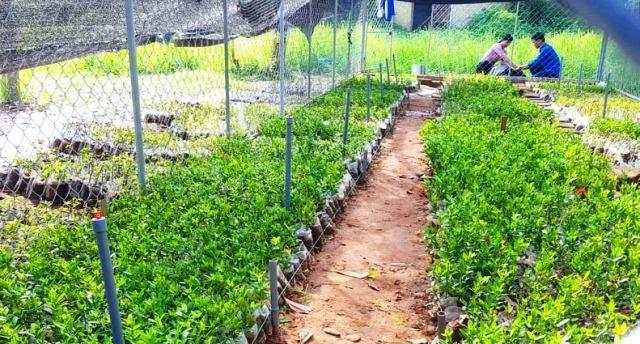Học sinh ươm cây xanh trồng ở nghĩa trang, di tích lịch sử - Ảnh 1.