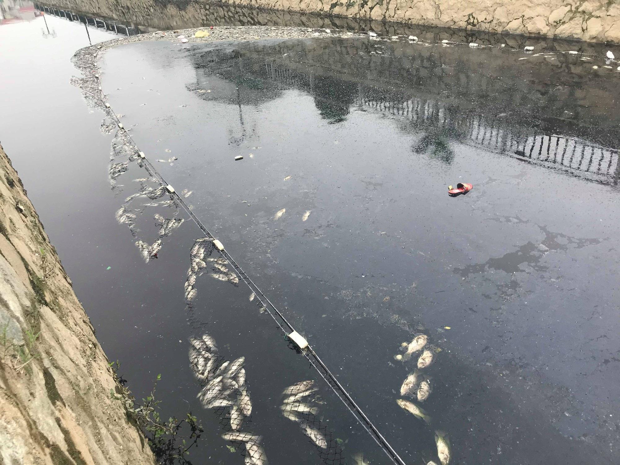 Cận cảnh đoạn kênh dày đặc cá chết tra tấn người dân tại TP Vinh! - Ảnh 11.