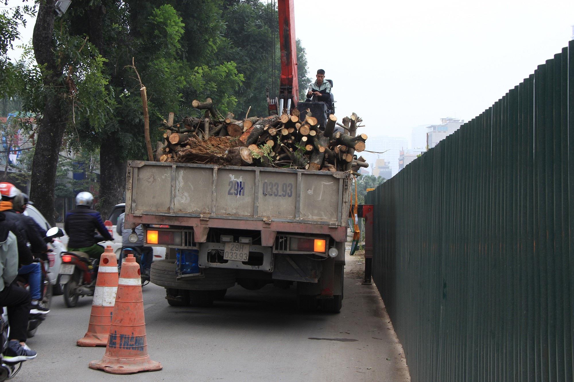 Công nhân ngày đêm đánh chuyển cây xanh, chạy đua mở rộng đường Láng - Ảnh 7.