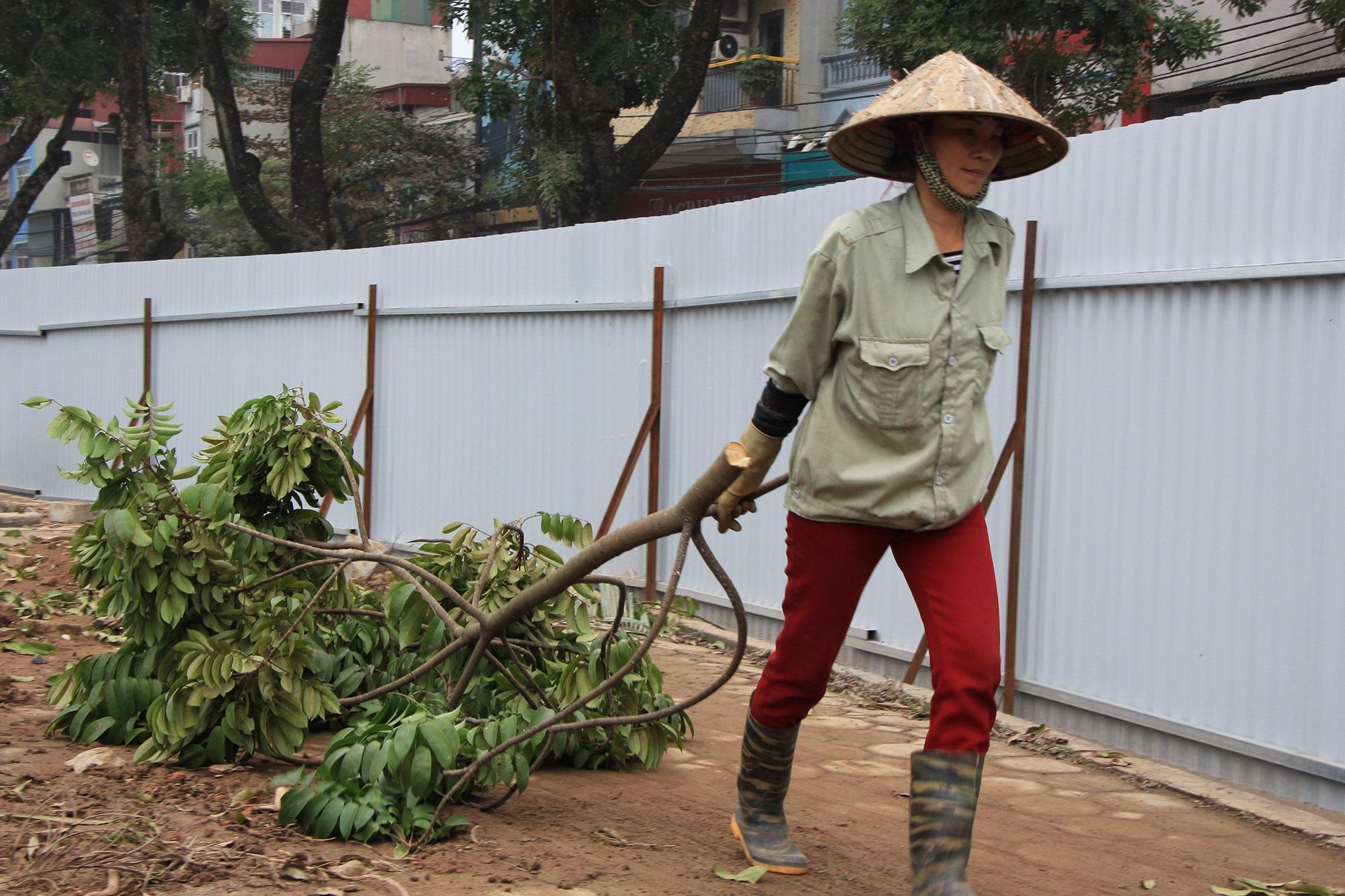 Công nhân ngày đêm đánh chuyển cây xanh, chạy đua mở rộng đường Láng - Ảnh 9.
