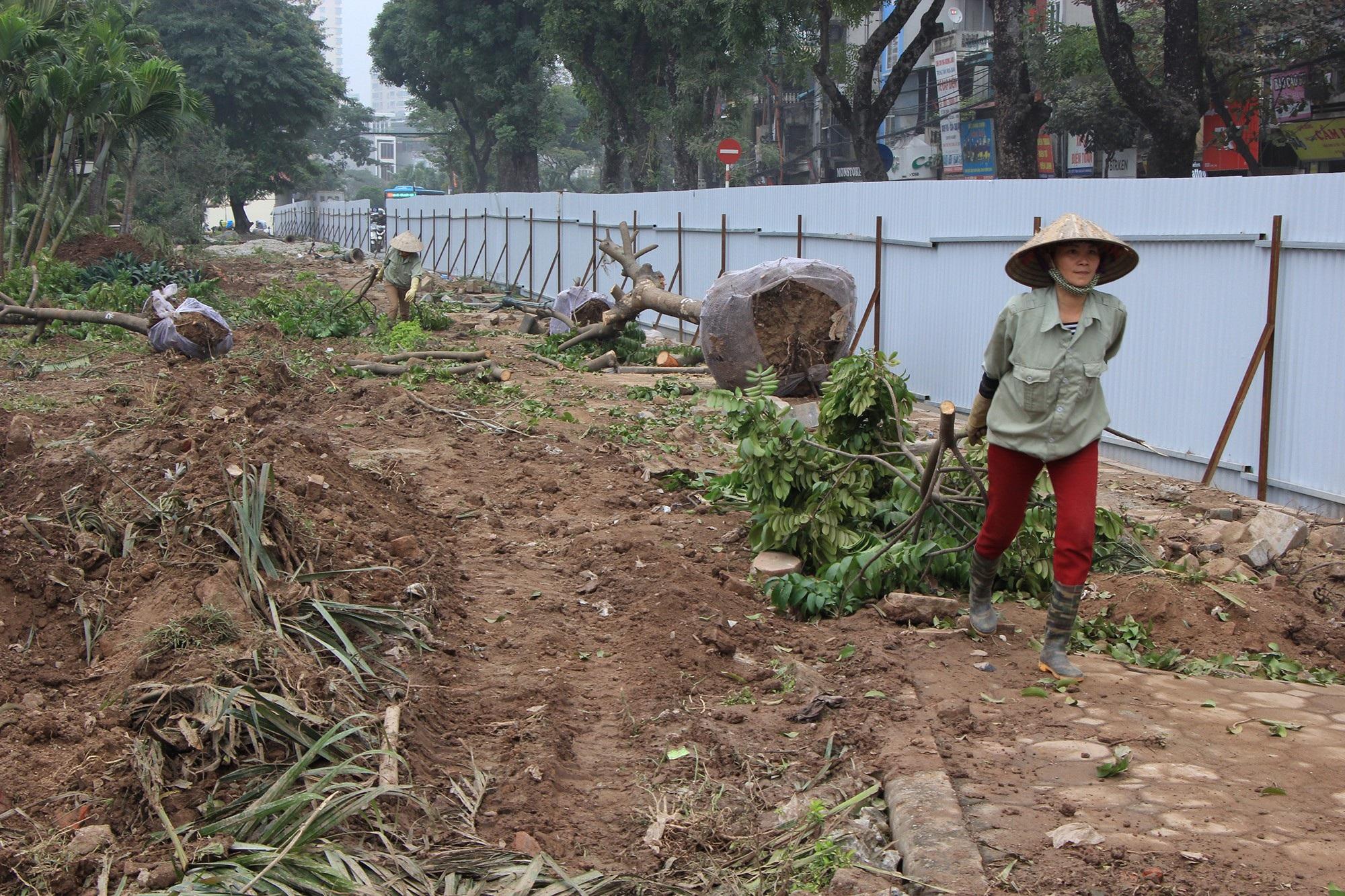 Công nhân ngày đêm đánh chuyển cây xanh, chạy đua mở rộng đường Láng - Ảnh 3.