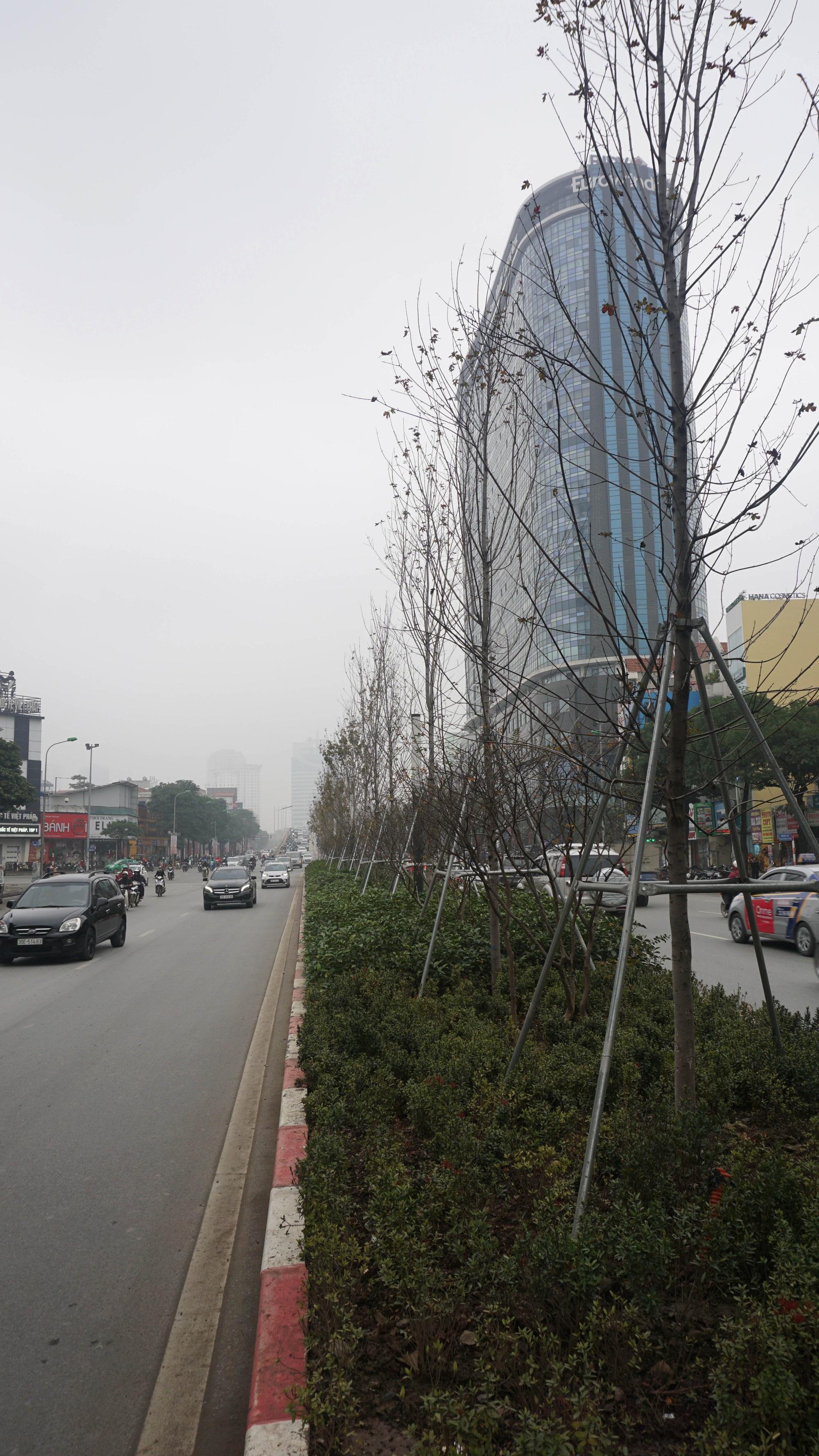 Phong lá đỏ ở Hà Nội chưa kịp đỏ đã ngả... màu đen - Ảnh 3.