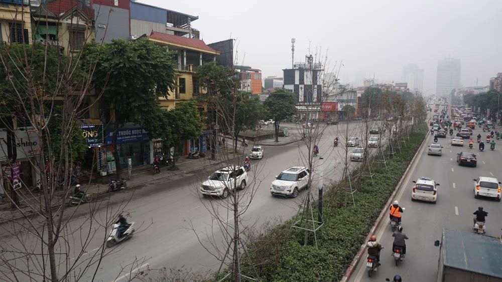 Phong lá đỏ ở Hà Nội chưa kịp đỏ đã ngả... màu đen - Ảnh 1.
