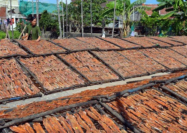 Cà Mau: Làng khô biển vào vụ Tết, nhân công kiếm bạc triệu - Ảnh 5.