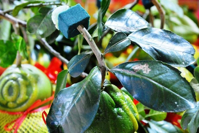 TPHCM: Săn trái cây độc, lạ phục vụ thượng đế ngày Tết - Ảnh 6.