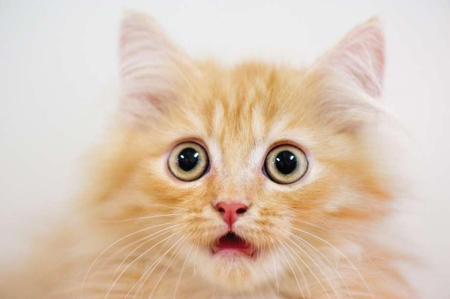 Mèo sang chảnh được chủ cho ở riêng trong căn nhà thuê 35 triệu đồng/tháng - Ảnh 1.