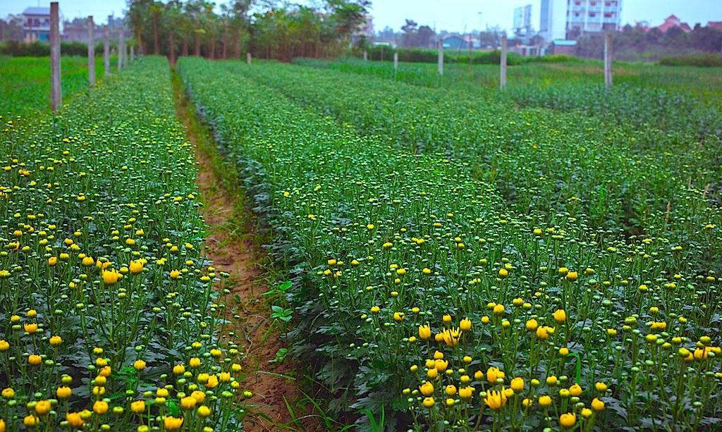 Làng hoa thành Vinh nhộn nhịp vào mùa Tết - Ảnh 1.