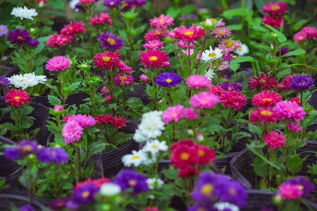 Làng hoa thành Vinh nhộn nhịp vào mùa Tết - Ảnh 8.