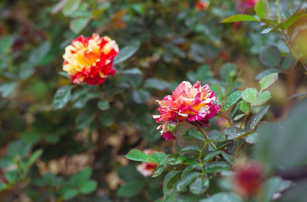 Làng hoa thành Vinh nhộn nhịp vào mùa Tết - Ảnh 7.