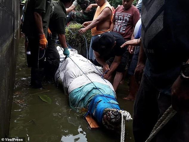 Cá sấu nhảy lên tường 2,5m, vồ chết nhà khoa học Indonesia - Ảnh 3.