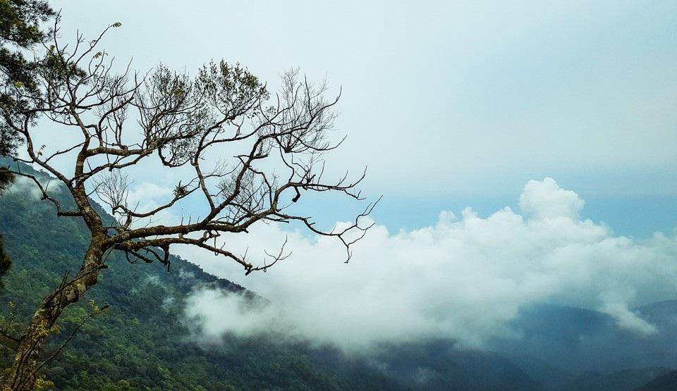 """Nghỉ Tết Nguyên đán: """"Săn"""" mây Tam Đảo, ngắm cải Mộc Châu - Ảnh 4."""
