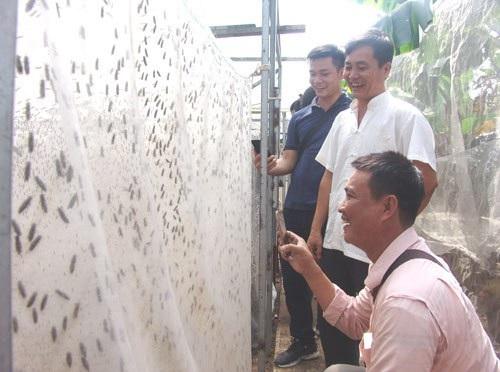 Thầy giáo bỏ nghề về quê... nuôi ruồi lấy trứng, bán 30 triệu đồng/ký - Ảnh 2.