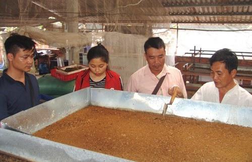 Thầy giáo bỏ nghề về quê... nuôi ruồi lấy trứng, bán 30 triệu đồng/ký - Ảnh 3.