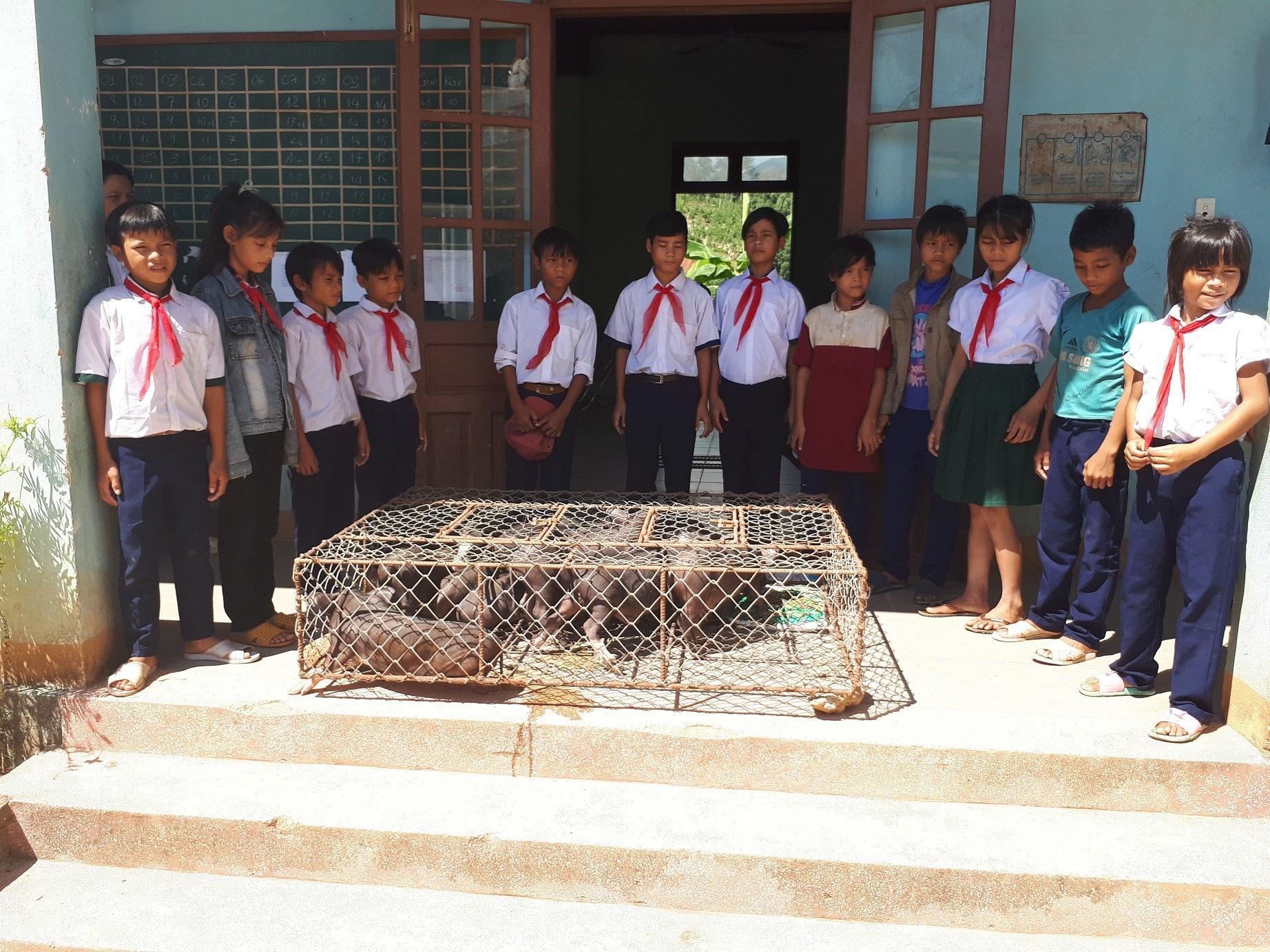 Trường vùng cao nuôi heo, gà, rau cải thiện bữa ăn cho các em - Ảnh 1.
