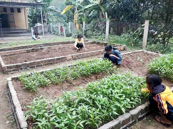 Trường vùng cao nuôi heo, gà, rau cải thiện bữa ăn cho các em - Ảnh 2.