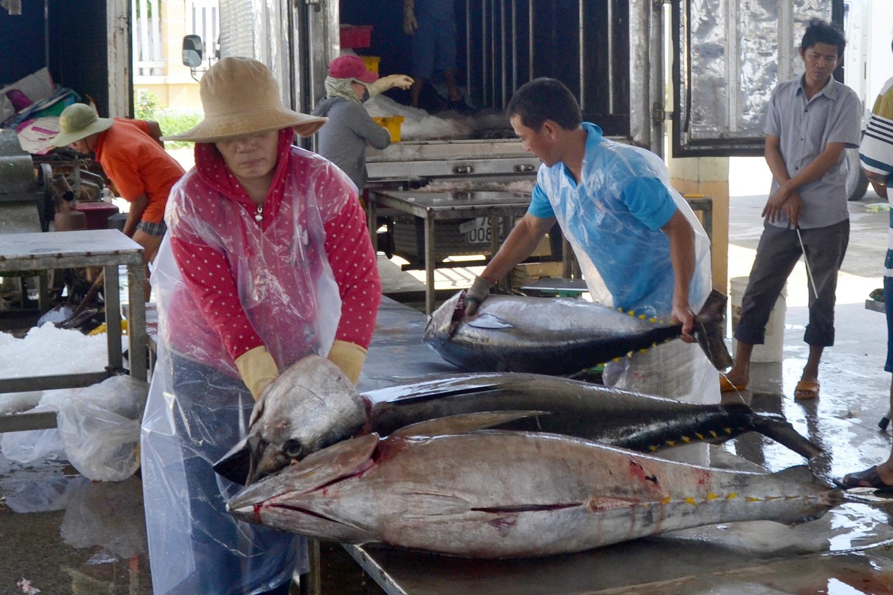 Giáp Tết: Ngư dân Phú Yên có tiền sắm tết vì trúng đậm cá ngừ đại dương  - Ảnh 5.