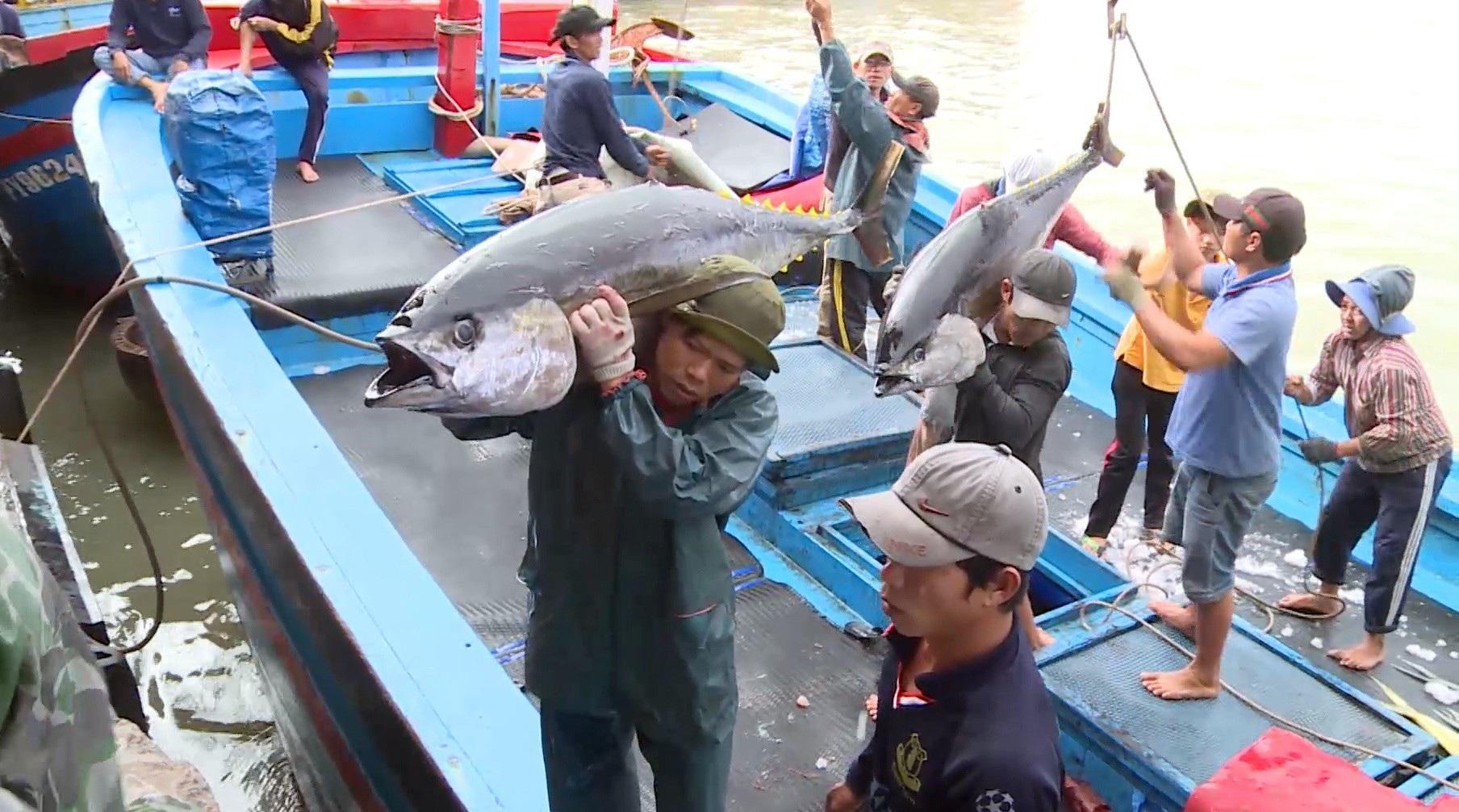 Giáp Tết: Ngư dân Phú Yên có tiền sắm tết vì trúng đậm cá ngừ đại dương  - Ảnh 3.